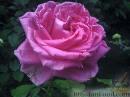 Варенье из лепестков роз: Лепестки варят не целиком: берут крупный цветок, все лепестки растения собирают вместе и отрезают ножницами так, чтобы основания лепестков (белого цвета) остались на цветках.
